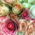 Roses- Pink And Cream by Marianna Mills