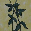 Long Stem Roses by PJ Wetak