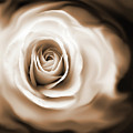 Rose's Whisper Sepia by Jennie Marie Schell