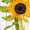 Rosezella's Sunflowers II by Anne Marie Brown