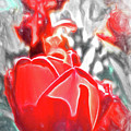Rosy Swirl by Jim Love