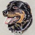Rottweiler Portrait by Daliana Pacuraru