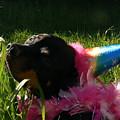 Rottweiler Princess by Kathryn Carlin
