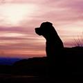 Rottweiler Sunrise by Gregory E Dean