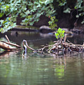 Roubidox Creek by Hyuntae Kim