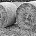 Round Hay Bales Black And White  by James BO  Insogna