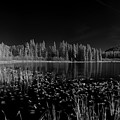 Round Lake State Park Idaho by Lee Santa