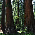 Round Meadow Sequoia Family Portrait by Kyle Hanson