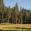 Round Meadow Sequoia National Park by NaturesPix