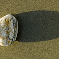 Round Rock And Shadow On Sand Dollar by Rich Reid