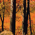 Round Valley State Park 3 by Raymond Salani III