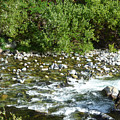 Rounded Rocks In A Rushing River by Andrea Freeman