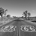 Route 66 With Joshua Trees In Black And White by Trekkerimages Photography