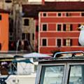 Rovinj Harbor Seagull - Rovinj, Istria, Croatia by Global Light Photography - Nicole Leffer