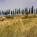 Row Of Cypress Trees, Tuscany by Robert Bowden
