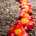 Row Of Flowers by Kathryn Jinae