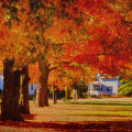 Row Of Maples by Jeff Folger