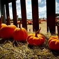 Row Of Pumpkins Sitting by Marisela Mungia