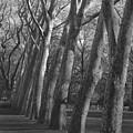 Row Trees by Henri Irizarri