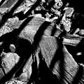 Royal Deadwood Striped by Robert Meyers-Lussier