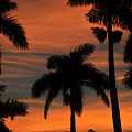 Royal Palms by David Lee Thompson