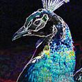 Royal Peacock by Shawna Dockery