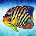 Royal Queen Angelfish by Nancy Tilles
