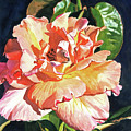 Royal Rose by David Lloyd Glover