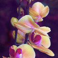 The Elegant Orchid by Jessica Jenney