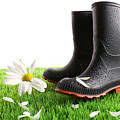 Rubber Boots With Daisy In Grass by Sandra Cunningham