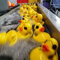 Rubber Duckies by Trish Hale