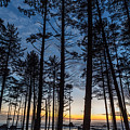 Ruby Beach Through The Trees by Michael Holly