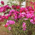 Ruby Like Flora by Zahra Majid