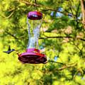 Ruby-throated Hummingbird 3 by Steve Harrington