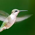 Ruby Throated Hummingbird by John Harmon