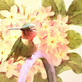 Ruby Throated Hummingbird by Tina LeCour