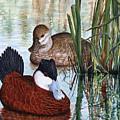 Ruddy Ducks by Elaine Booth-Kallweit