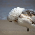 Ruffled Feathers by Jeanette Wygant