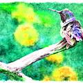 Ruffled Hummingbird - Digital Paint 5 by Debbie Portwood