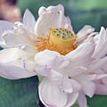 Ruffly Lotus by Kathy Ricca