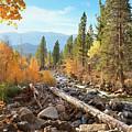 Rugged Sierra Beauty by Brian Tada