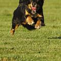 Run Dog Run by Jill Reger