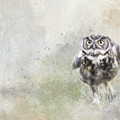 Run Little Owl by Jai Johnson