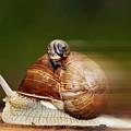 Runaway Snail by Michal Boubin