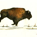 Running Buffalo by Juan  Bosco