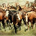 Running Free Horses IIi by Athena Mckinzie