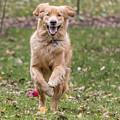 Running Happy by Sue Matsunaga