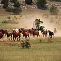 Running Herd by Fay Geddes