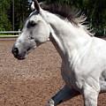 Running Horse by Jarmo Honkanen