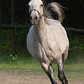 Running Horse by Jaroslaw Grudzinski